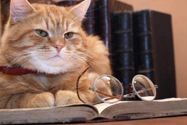Kucing tua dan bijak membaca buku