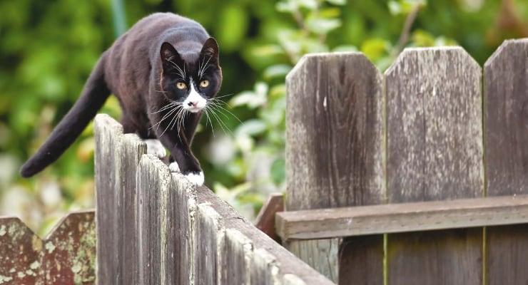 kucing berjalan di pagar photo
