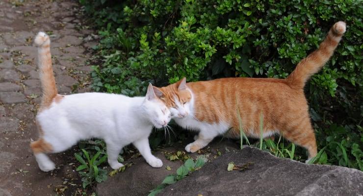 kucing berkomunikasi dengan ekor