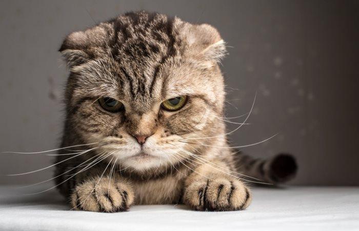 Kucing itu nakal dan tidak minum air