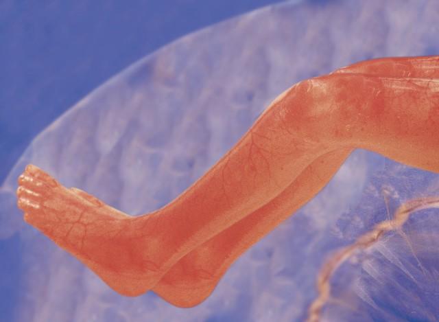 Nóżki dziecka ok. 12 tygodni od poczęcia. Fot.: J. Walczewski
