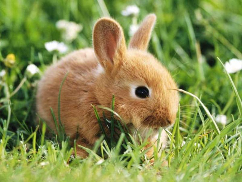 de ce iepurii pierd brusc în greutate