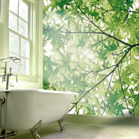 Papiers peints Chlorophylle