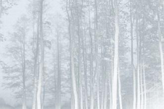 Papier peint panoramique La Forêt Enchantée