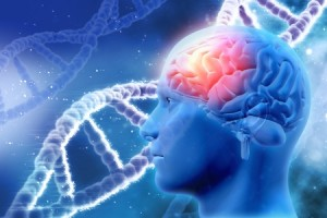 47499705 - 3d medical background with male head with brain and dna strands