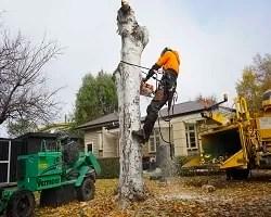 tree felling christchurch