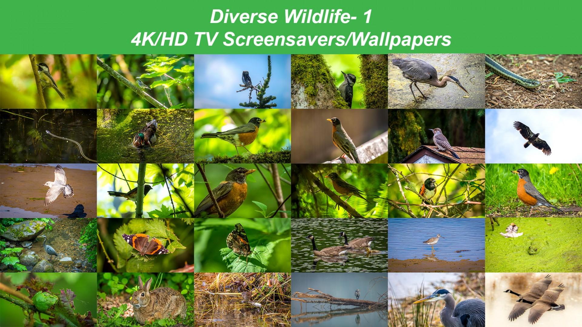 4k tv screensavers wallpapers