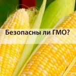 ГМО - осторожно, опасность!
