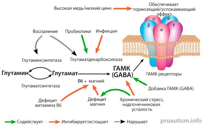 Превращение Глутамина, глутамата в ГАМК