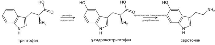 синтез серотонина из триптофана