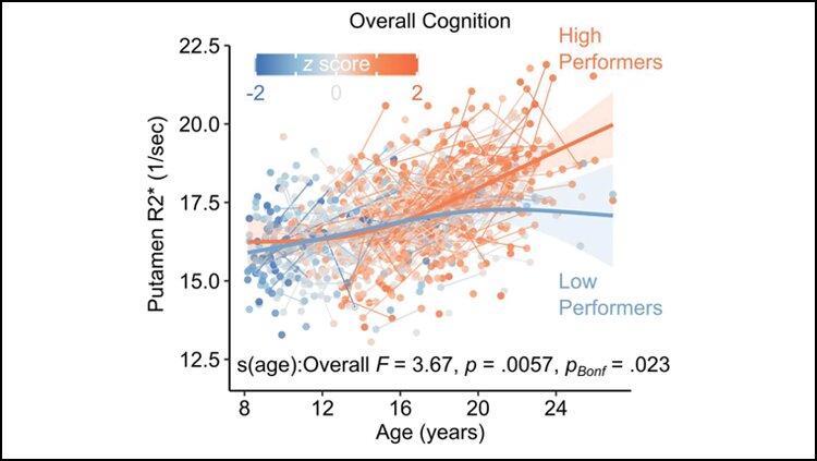 Корреляция уровня железа в тканях с когнитивным развитием