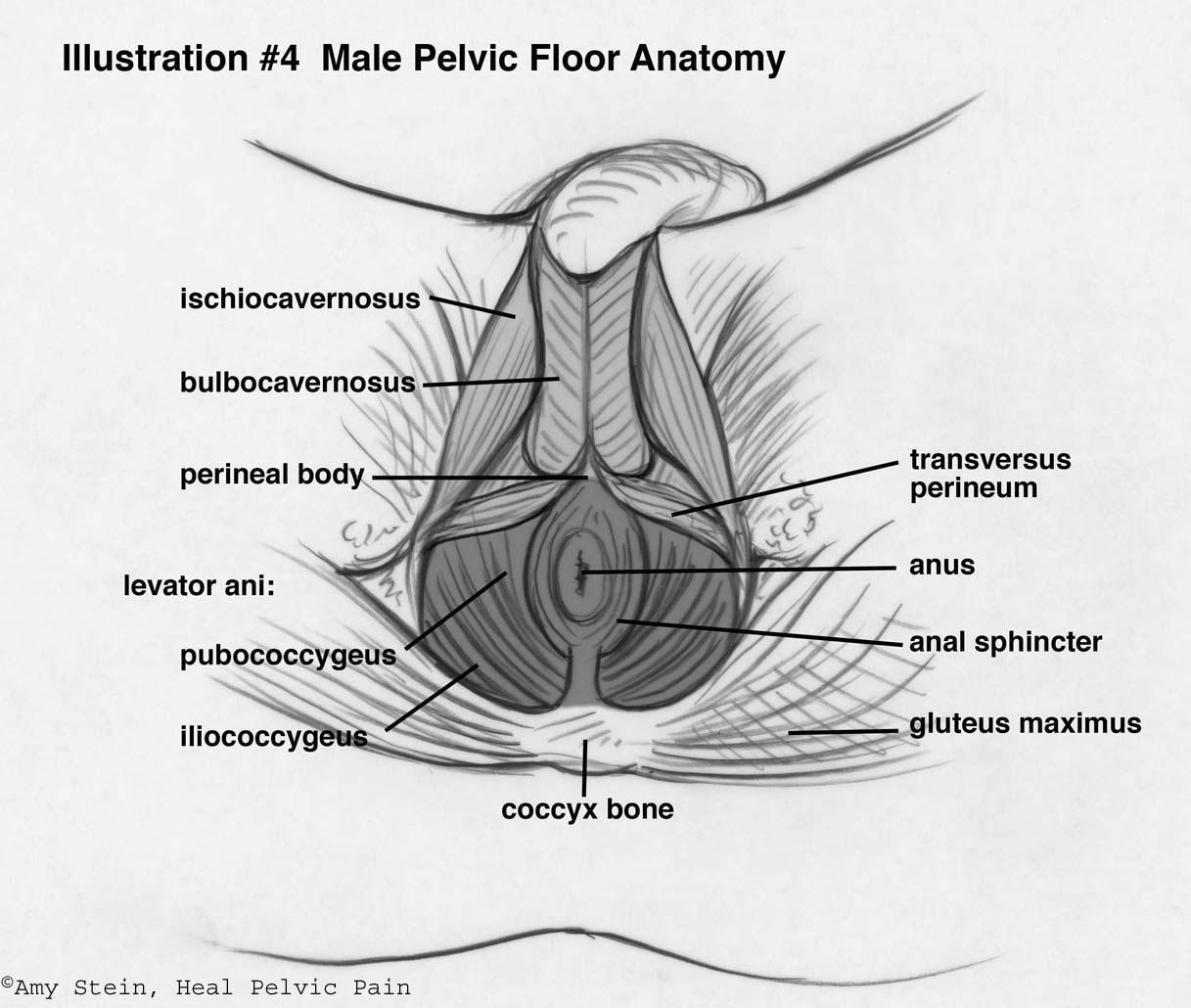 About Pelvic Pt
