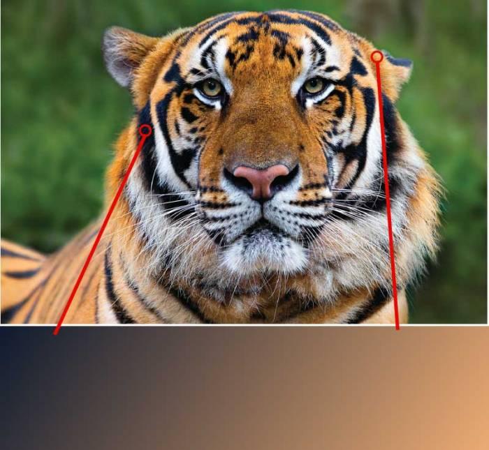 Tiger-Color-Combination