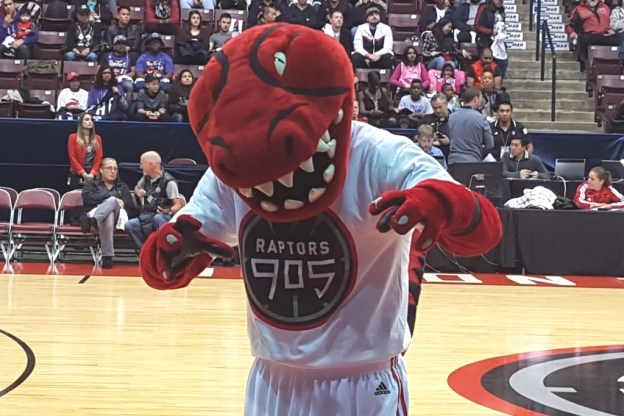 Raptors 905 Stripes