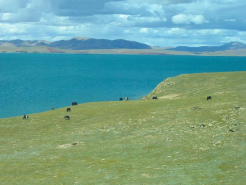 How to travel to Tibet - first Yak sighting along the way