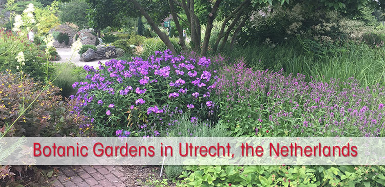 There is more to explore in the Netherlands than just Amsterdam. Find tranquil nature near the city centre on your visit to the Botanic Gardens in Utrecht, the Netherlands.