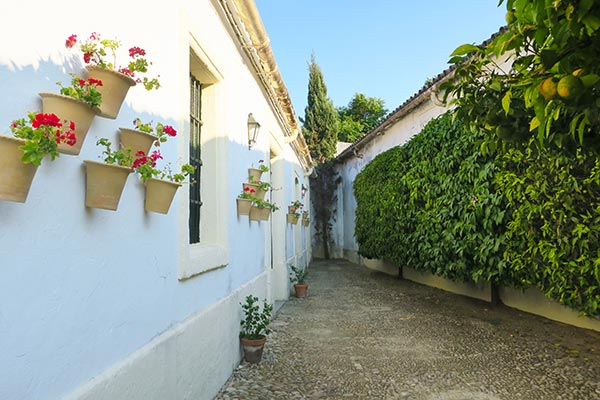 White wall with pink flowers at the Gonzalez Byass sherry bodega during the sherry tasting tour in Jerez de la Frontera.