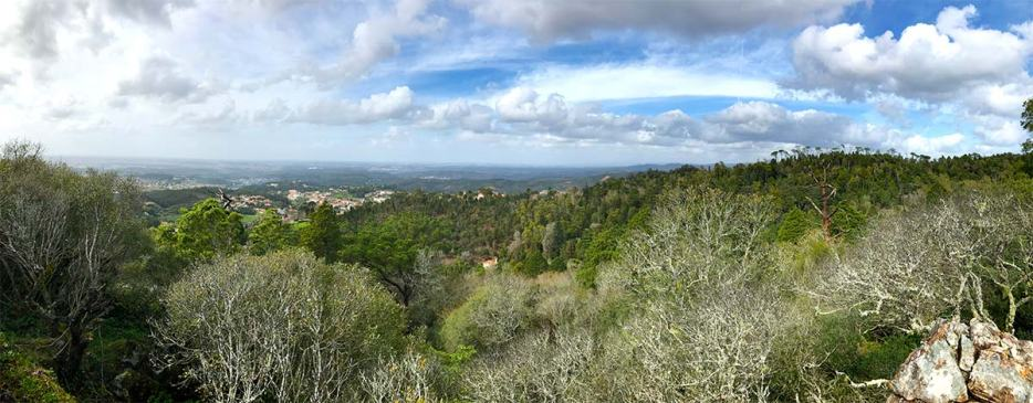 Bussaco Forest Portugal -Panaroma of the forest