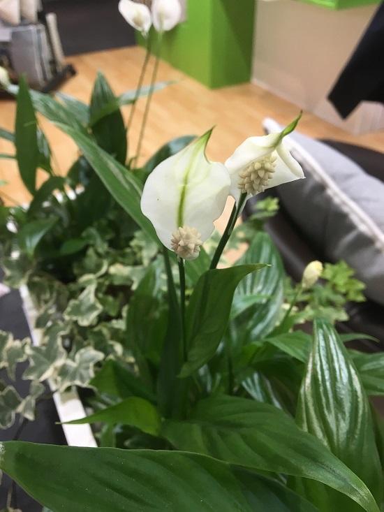Ambiente 2018 Blumen auf Stand von Hugo Frosch Wärmflaschen Probenqueen