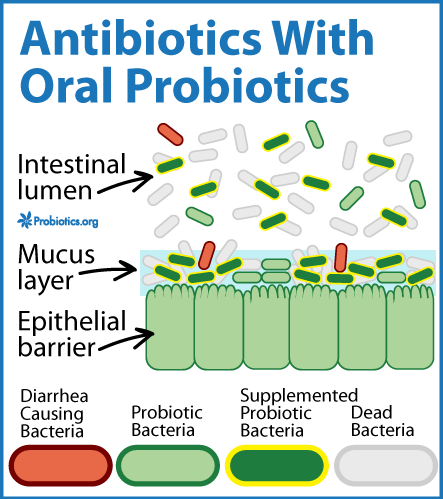 Take Probiotics While on Antibiotics? I always do ...