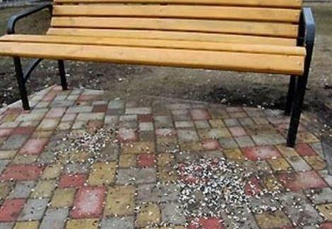 Amenzi aplicate de Poliția Locală pentru gunoaiele aruncate pe domeniul public