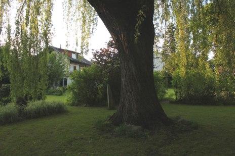 Guscha Weide (6)