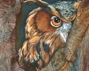 owl_eyes_anita