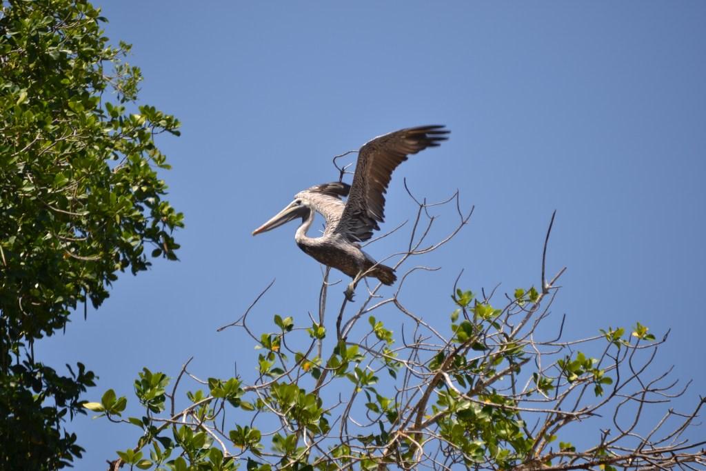 Es el hábitat perfecto para aves endémicas, pero también se observan migratorias.