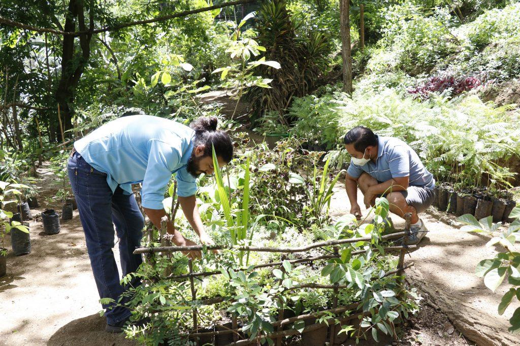 Reforestación en el Cerro de la Cruz