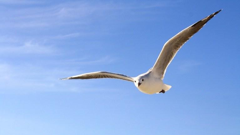 Autoliderança e a respiração consciente