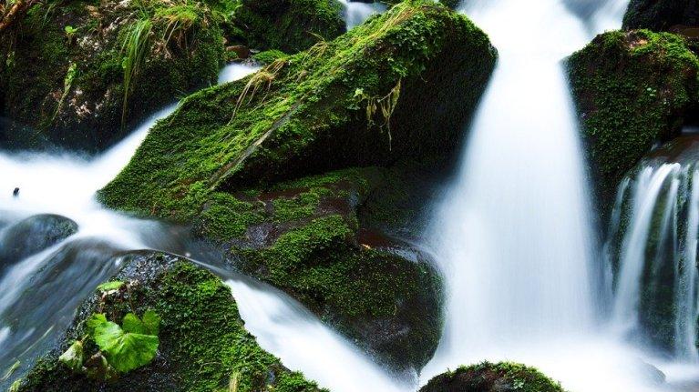 O fluxo da vida segue no caminho certo