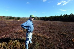 Bill Fox standing in a cranberry bog at Fox's Cranberry Bog in Mullica Township, NJ, in 2011. Photo by Anthony Smedile.