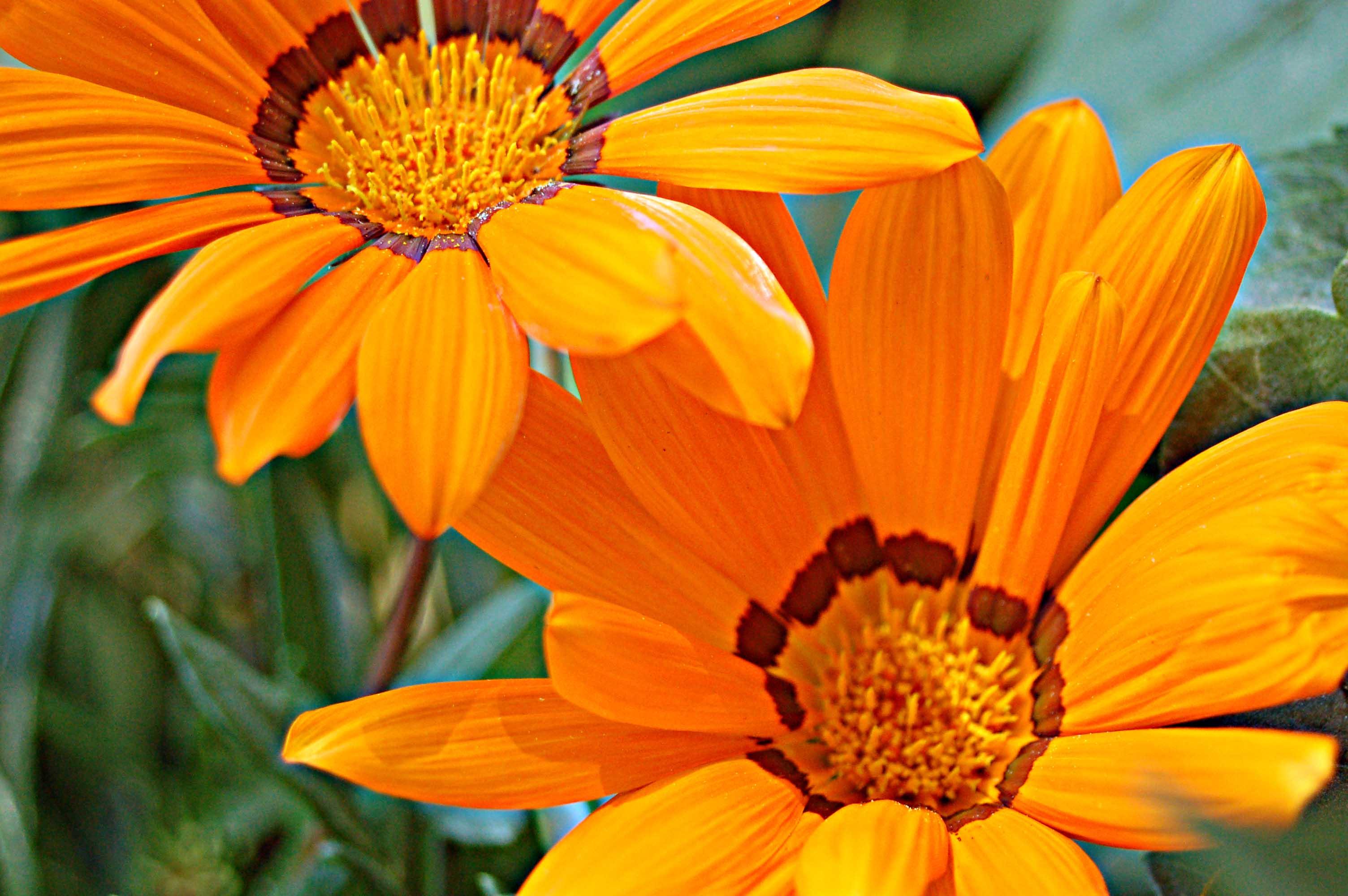 small-daisy12