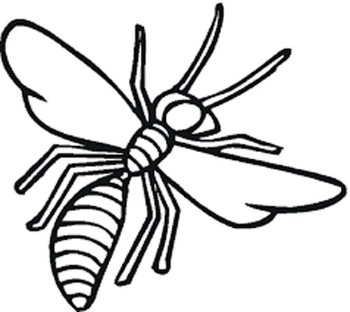 Wasp Coloring Page For Free