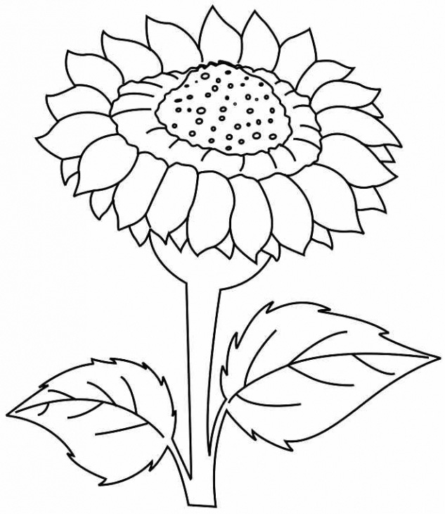 Sunflower Coloring Book Pages Sketch Coloring Page