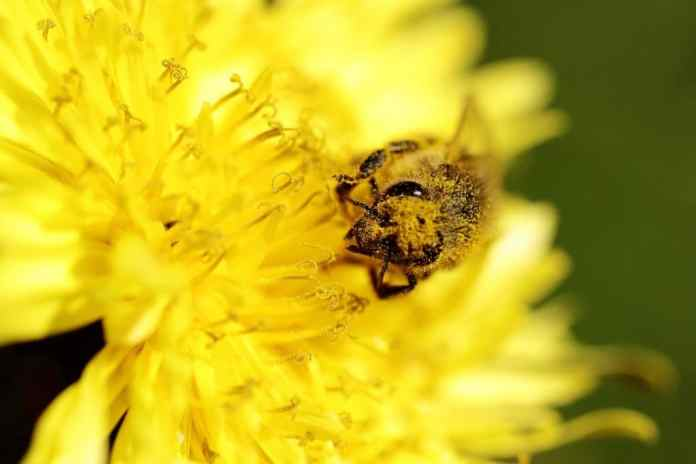 polinizacion de las abejas