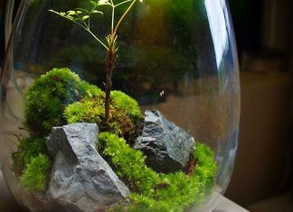 Eternal Terrarium
