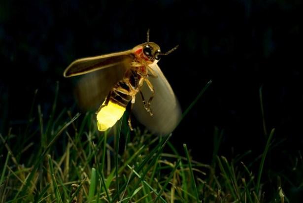 organismos bioluminiscentes