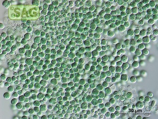 bacteria capaz de vivir en marte