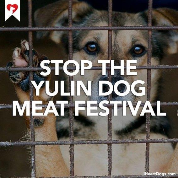 ley contra festival yulin