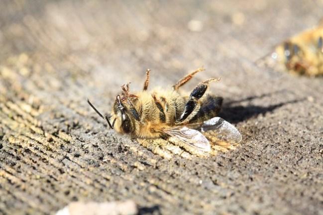 abejas mueren por plaguicidas
