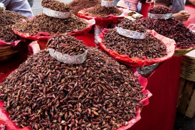 países comida insectos