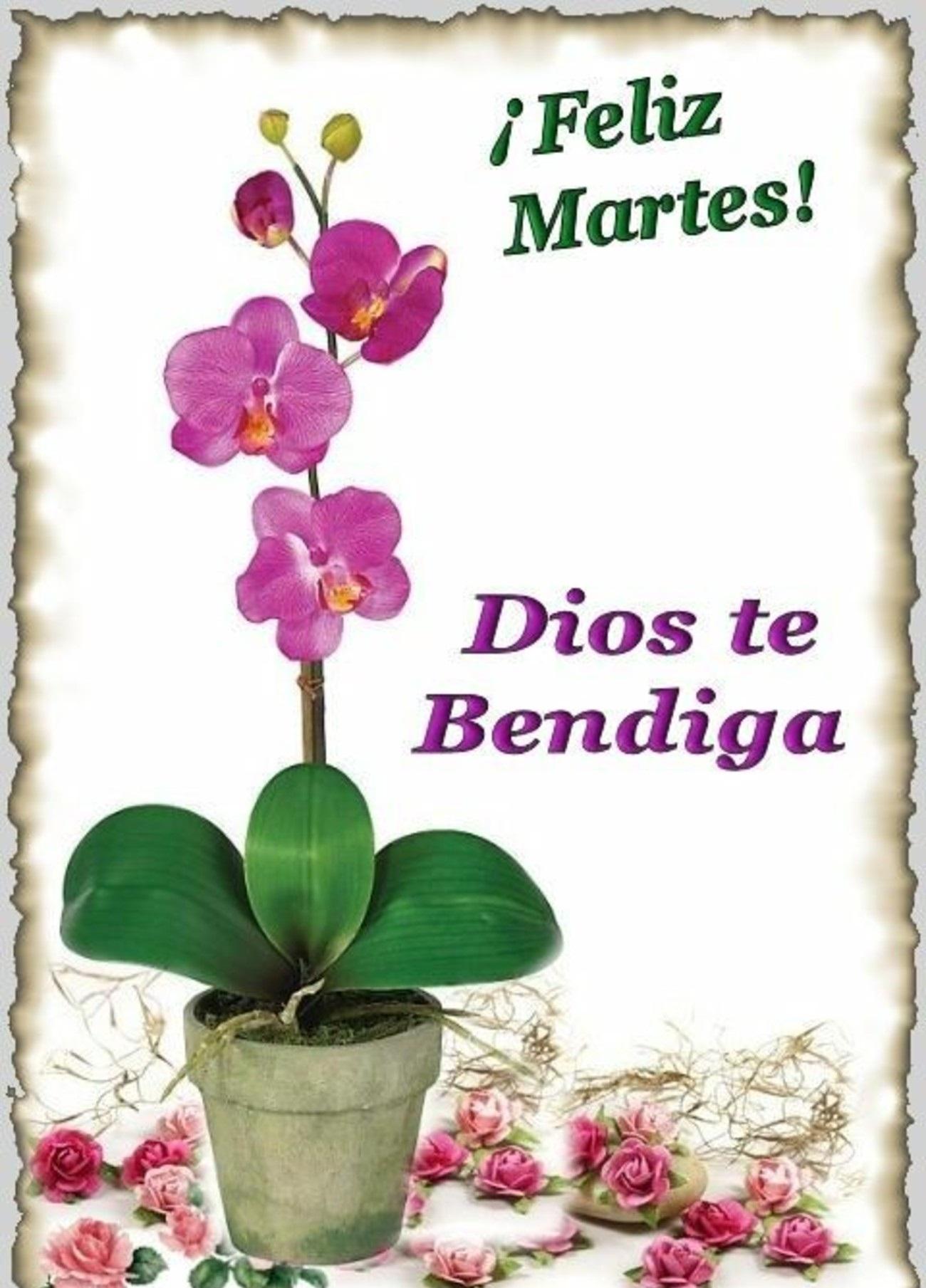 Feliz Martes 115 1