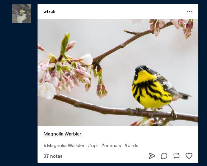 Estilo Tumblr (ejemplos + cómo hacer las fotos)