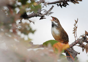 Birding binoculars image