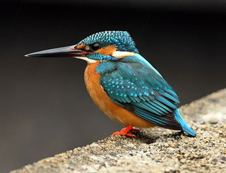 Bird watching image