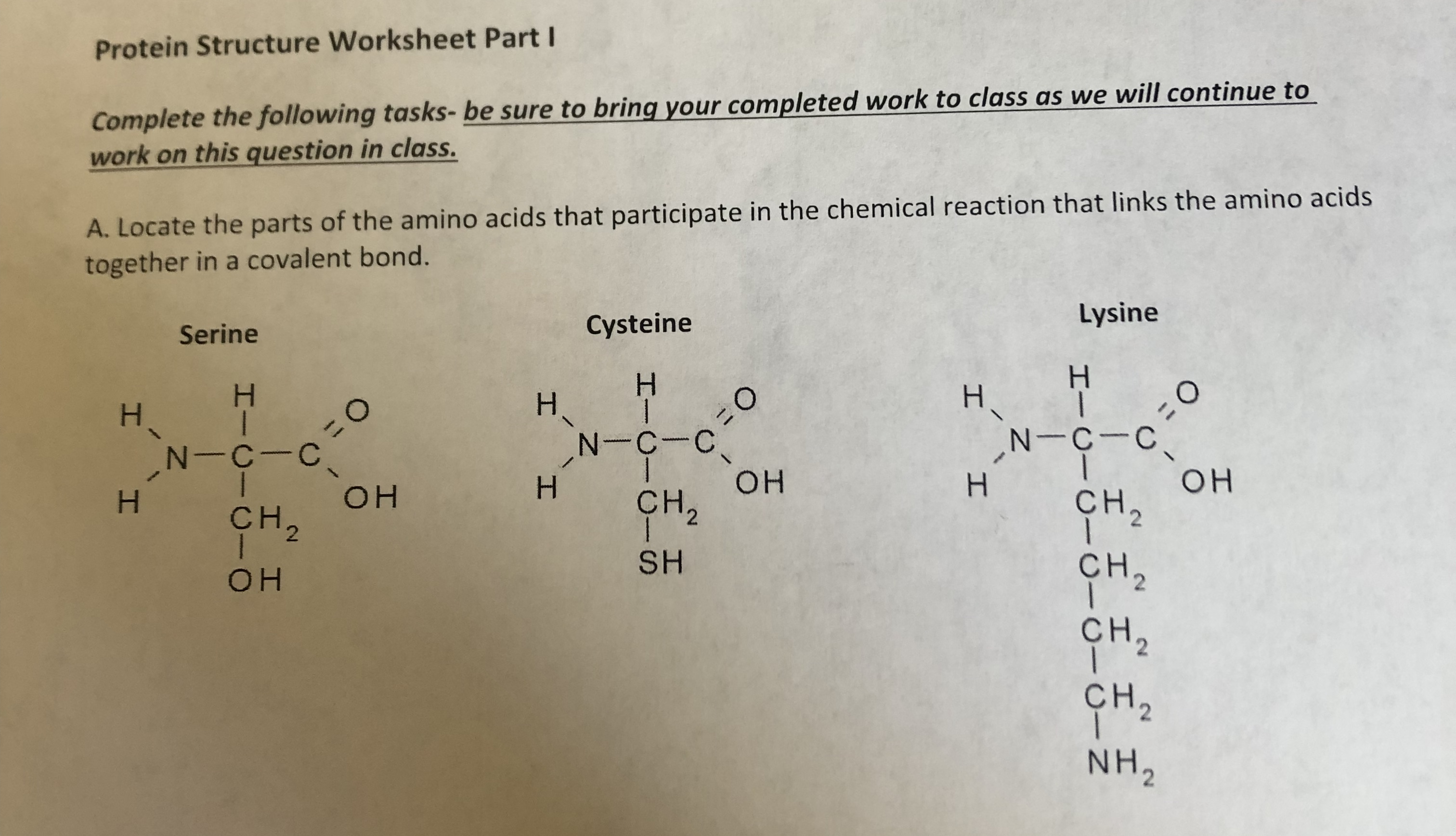 Answered Protein Structure Worksheet