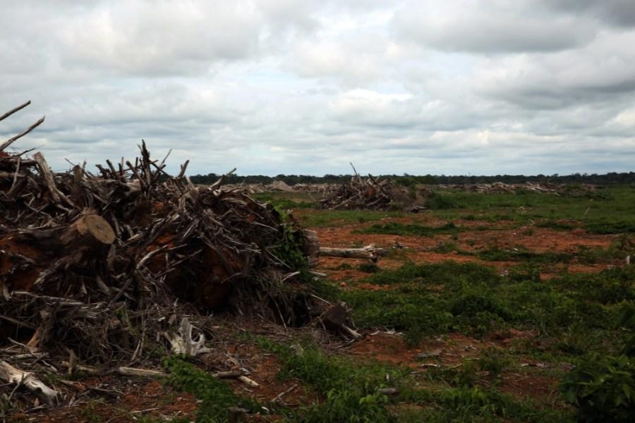 terra-agronegocio-floresta-abaixo-arrancar-as-raizes-das-arvores-derrubadas-1486998019