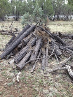 Burn pile before