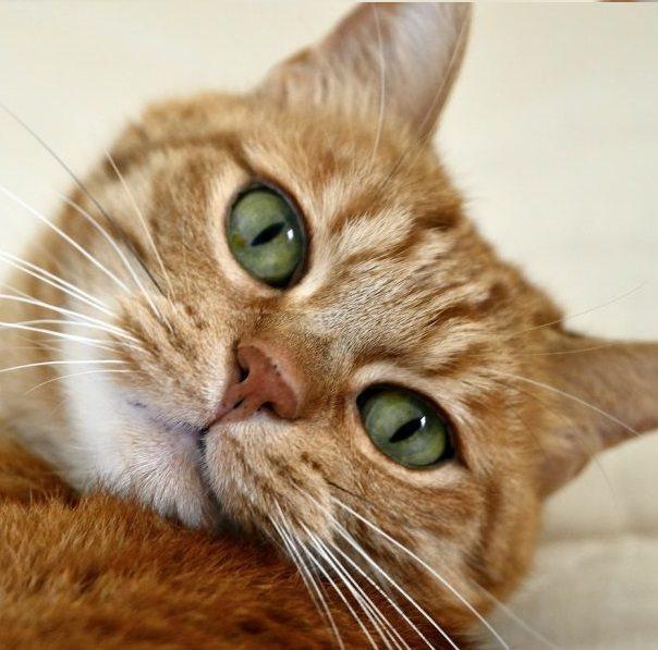 Adoptar gato adulto